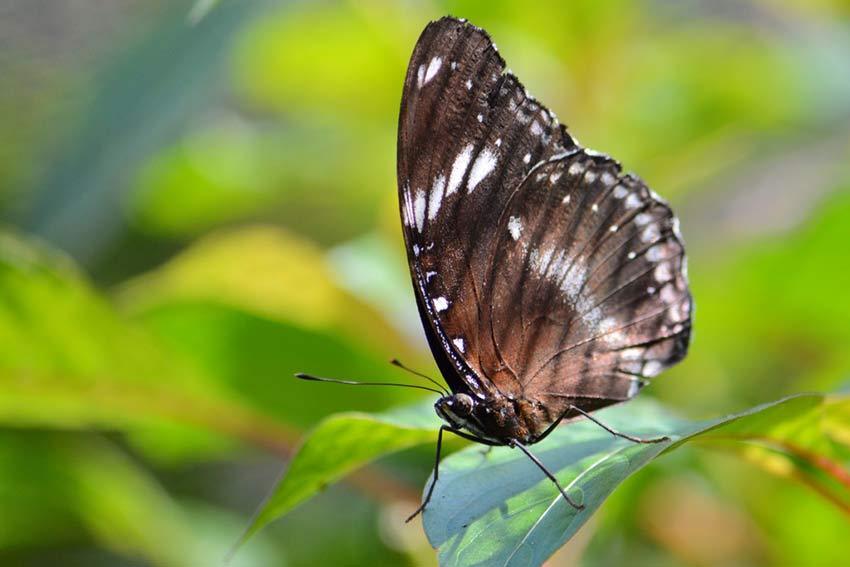 Сад бабочек в Пуэрто Принцессе: макрофотографии в мельчайших подробностях